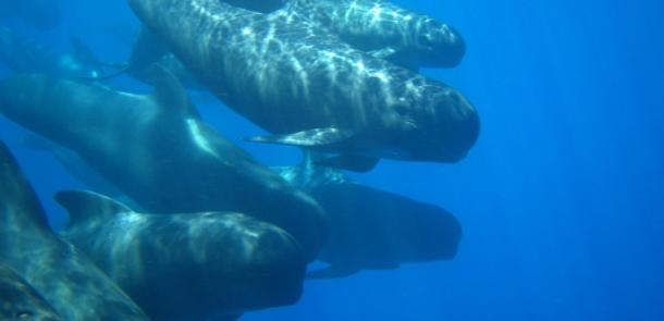 Cumplido el objetivo del LIFE IP INTEMARES de alcanzar el 10% de aguas marinas protegidas