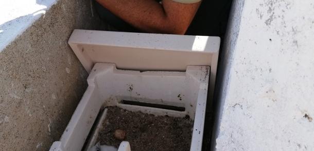 Ocupados dos nidales en la iglesia de San Mateo en la ZEPA Colonias de cernícalo primillla de Alburquerque